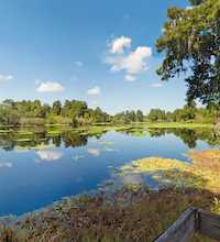 This link leads to a panoramic image of Lettuce Lake Park in Tampa. The photographic images were shot with a Canon S95.